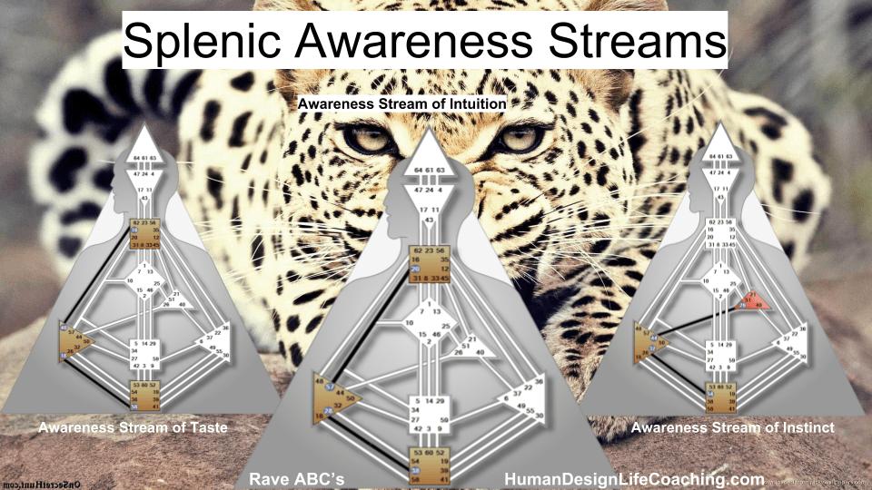 Splenic Center Streams of Awareness - Learn more in Rave ABC's
